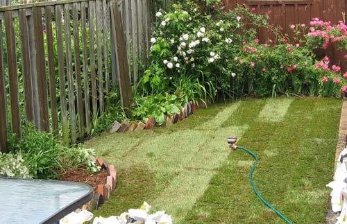 Photo of green and lush backyard