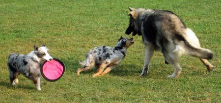 Photon and Callie play