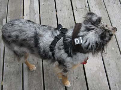 Photon collar